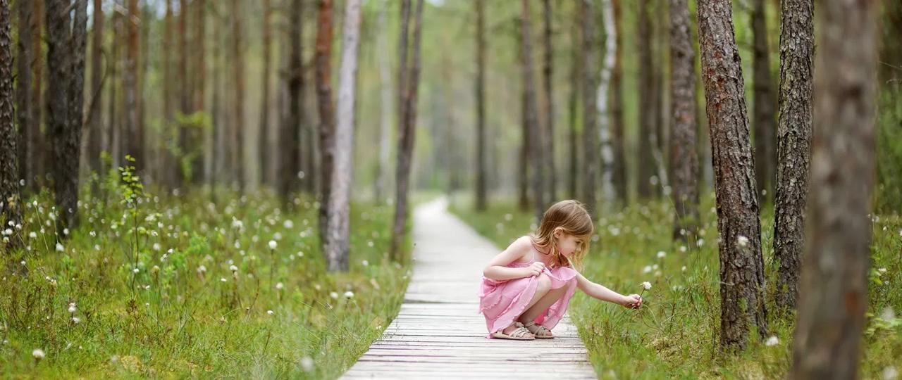 Ostame metsakinnistuid üle Eesti - Forest Reserves OÜ