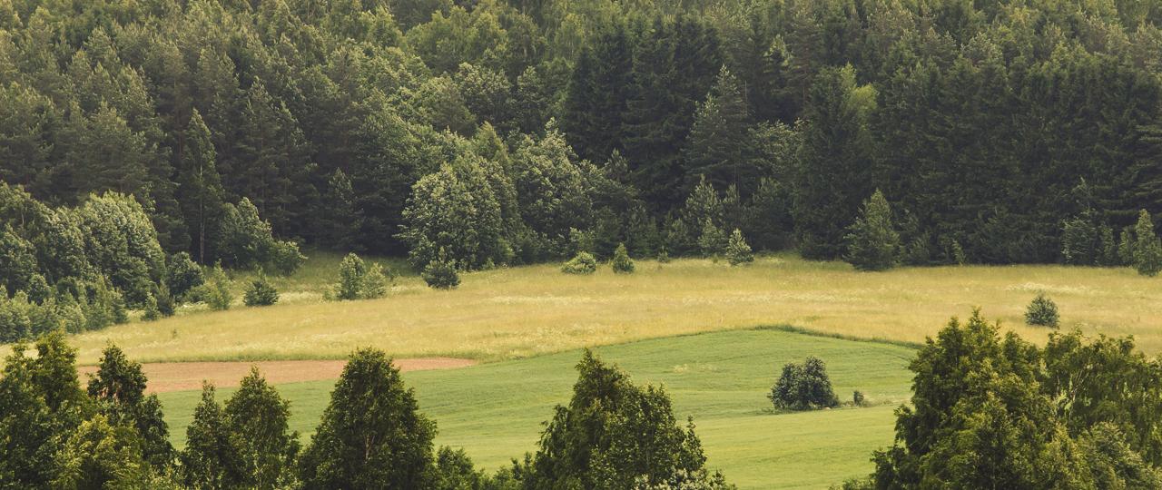 Ostame põllumaad üle Eesti - Forest Reserves OÜ