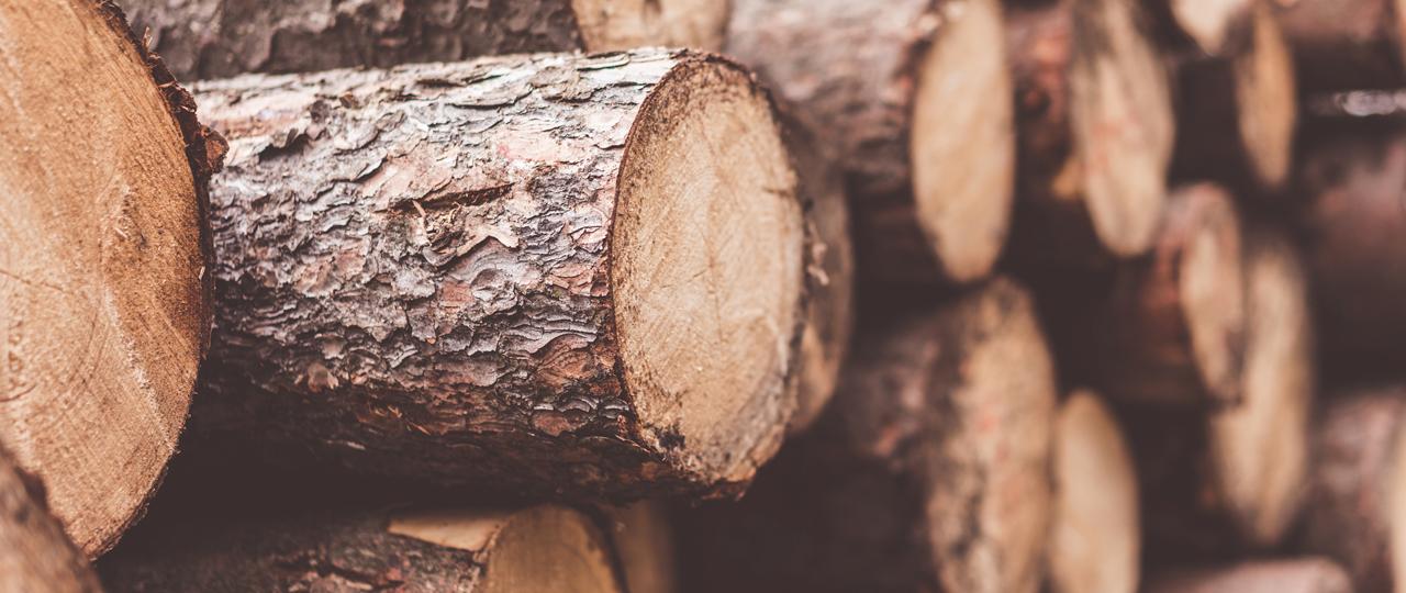 Ostame kasvava metsa raieõigust - Forest Reserves OÜ